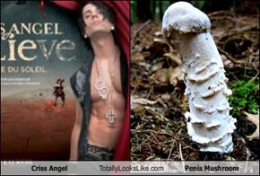 Criss Angel Totally Looks Like Penis Mushroom