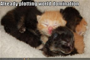 Already plotting world domination