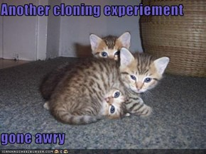Another cloning experiement  gone awry