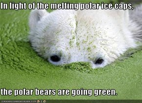 In light of the melting polar ice caps,  the polar bears are going green.