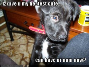 Iz give u my bestest cute...  can have ur nom now?