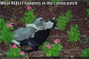 What REALLY happens in the catnip patch