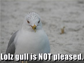 Lolz gull is NOT pleased.