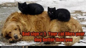 Bad sign # 1:  Your cat likes your dog better than you
