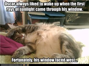 Oscar always liked to wake up when the first rays of sunlight came through his window.