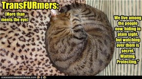 TransFURmers: