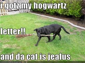 i gotz my hogwartz  letter!! and da cat is jealus