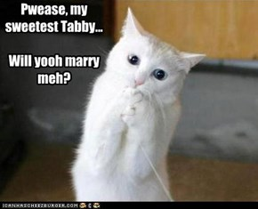 Pwease, my sweetest Tabby...  Will yooh marry meh?
