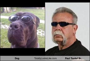 Dog Totally Looks Like Paul Teutul Sr.
