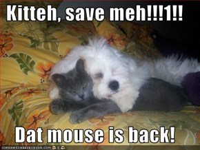 Kitteh, save meh!!!1!!  Dat mouse is back!