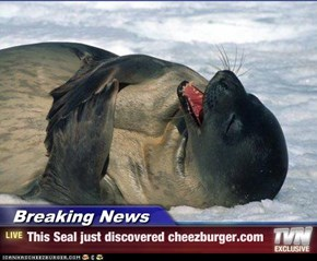 Breaking News - This Seal just discovered cheezburger.com