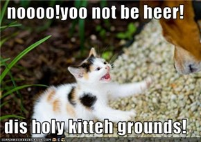 noooo!yoo not be heer!  dis holy kitteh grounds!