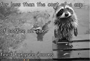 for less than the cost of a cup of coffee u2 can feed hungree 'coons