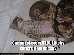 One out of every 5 LOL kittehs suffers from obesity
