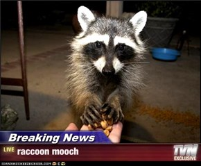 Breaking News - raccoon mooch