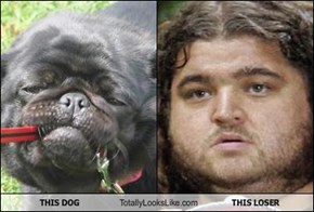 THIS DOG Totally Looks Like THIS LOSER