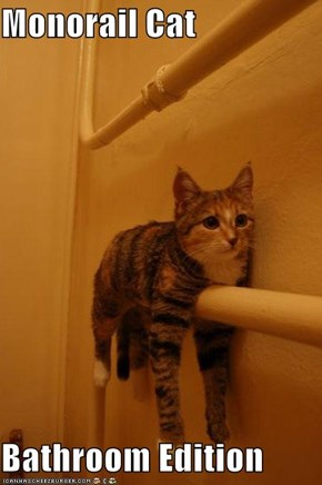 Monorail Cat  Bathroom Edition