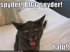spyder! BIGG spyder!  halp!