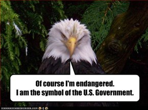 Of course I'm endangered.  I am the symbol of the U.S. Government.