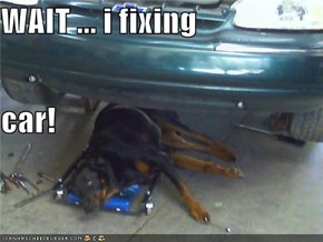 WAIT ... i fixing car!