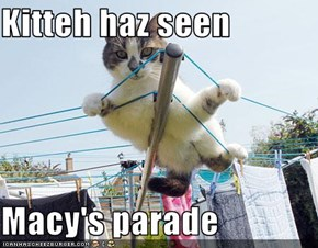 Kitteh haz seen  Macy's parade