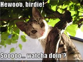 Hewooo, birdie!  Sooooo... watcha doin'?