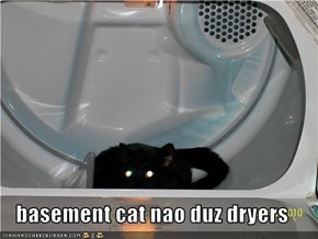 basement cat nao duz dryers