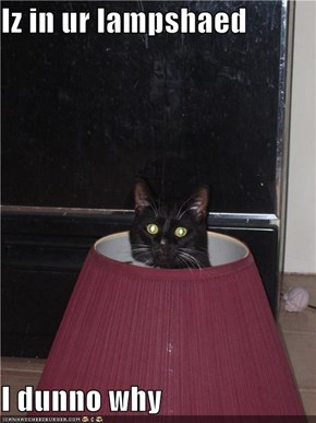 Iz in ur lampshaed  I dunno why