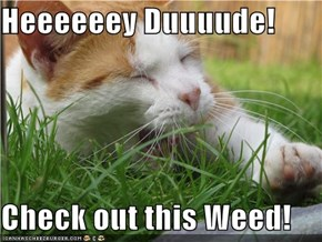 Heeeeeey Duuuude!  Check out this Weed!