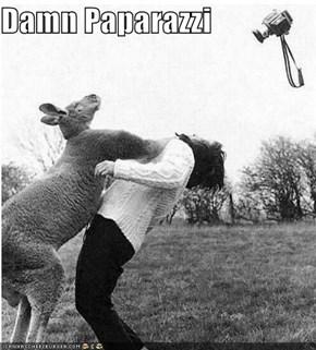 Damn Paparazzi