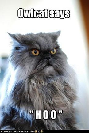 Owlcat says