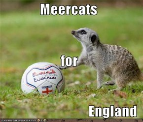 Meercats for  England
