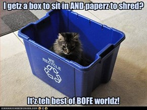 I getz a box to sit in AND paperz to shred? It'z teh best of BOFE worldz!