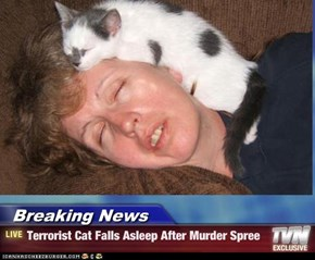 Breaking News - Terrorist Cat Falls Asleep After Murder Spree