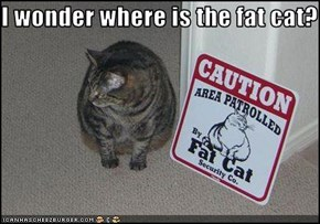 I wonder where is the fat cat?