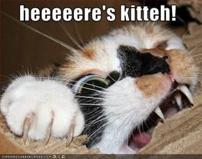 heeeeere's kitteh!