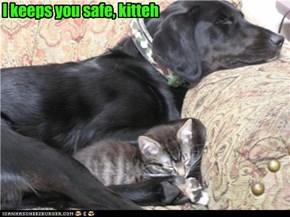 I keeps you safe, kitteh
