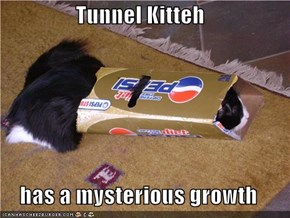 Tunnel Kitteh  has a mysterious growth