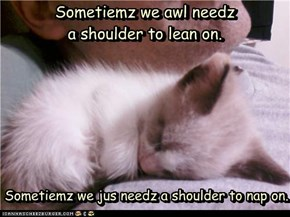 Sometiemz we awl needz a shoulder