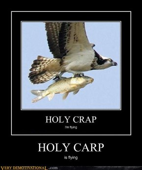 HOLY CARP