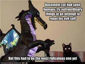 Basement cat had seen humans try extraordinary things in an attempt to repel his evil self