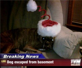 Breaking News - Dog escaped from basement