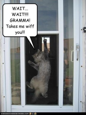 WAIT... WAIT!!!! GRAMMA! Takes me wiff you!!!