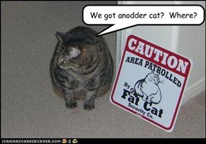 We got anodder cat?  Where?