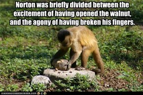 Norton was briefly divided between the excitement of having opened the walnut, and the agony of having broken his fingers.