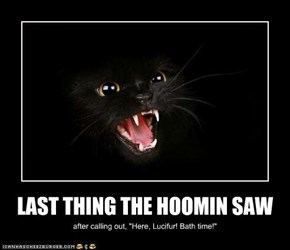 LAST THING THE HOOMIN SAW