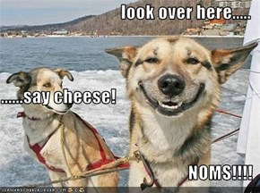 look over here..... ......say cheese! NOMS!!!!