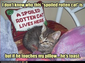 "I don't know who this ""spoiled rotten cat"" is"