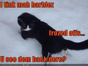 I tink mah harblez frozed offs... U see dem back dere?