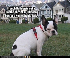 French Bulldog is not a Boston Terrier, a  Chinese Pug, or a Homophobic Jerk.